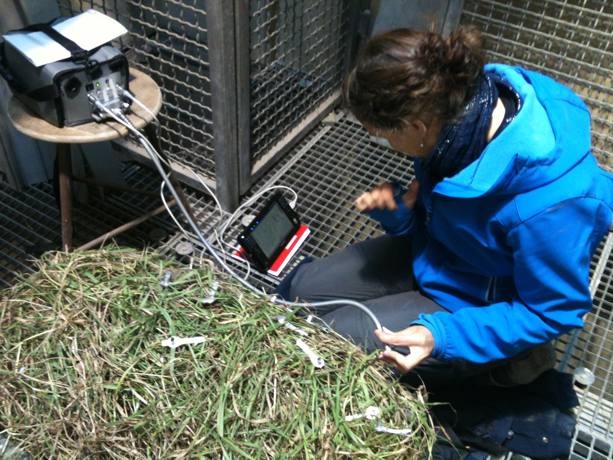 Plants in our control box (light treatment without waves) undergo their health check