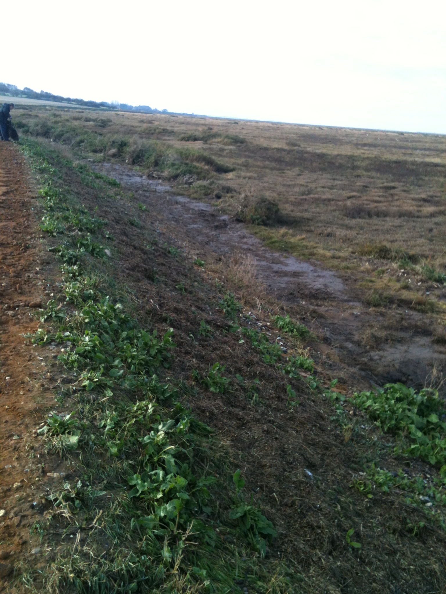 Vegetation removal in front of sea wall after the 5th December surge, Norfolk